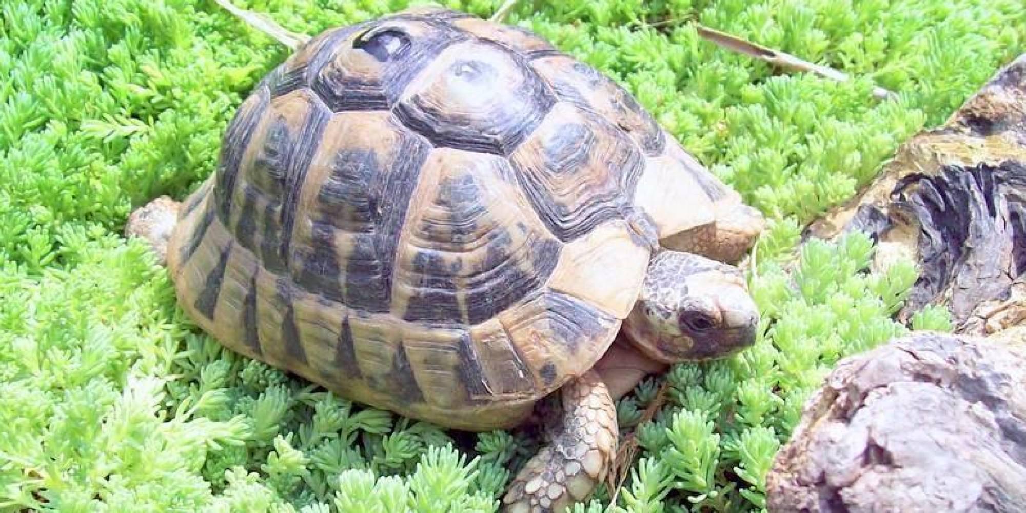 Salva le tartarughe e crea un 39 oasi per tutelarle sono for Tartarughe di acqua dolce