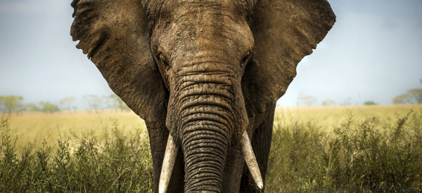 Is Swaziland Selling Live Elephants and Rhino Horns Simply for Profit?