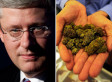 Omnibus Crime Bill: Marijuana Prohibition In Canada Should Be Ended By Stephen Harper, Says International Panel