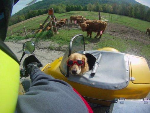 barley in sidecar