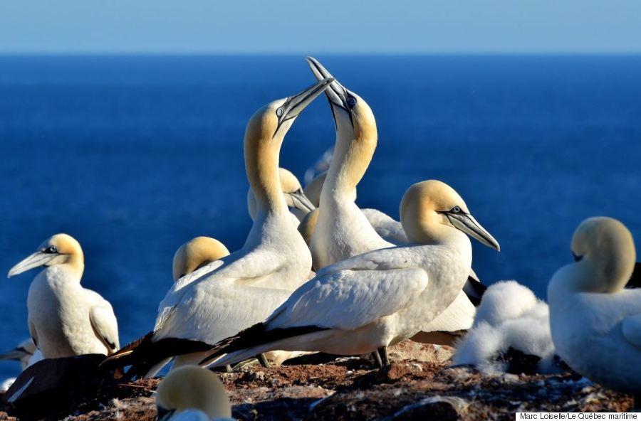 maritime birds