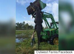 Floride: un chasseur abat un alligator de quatre mètres (VIDÉO)