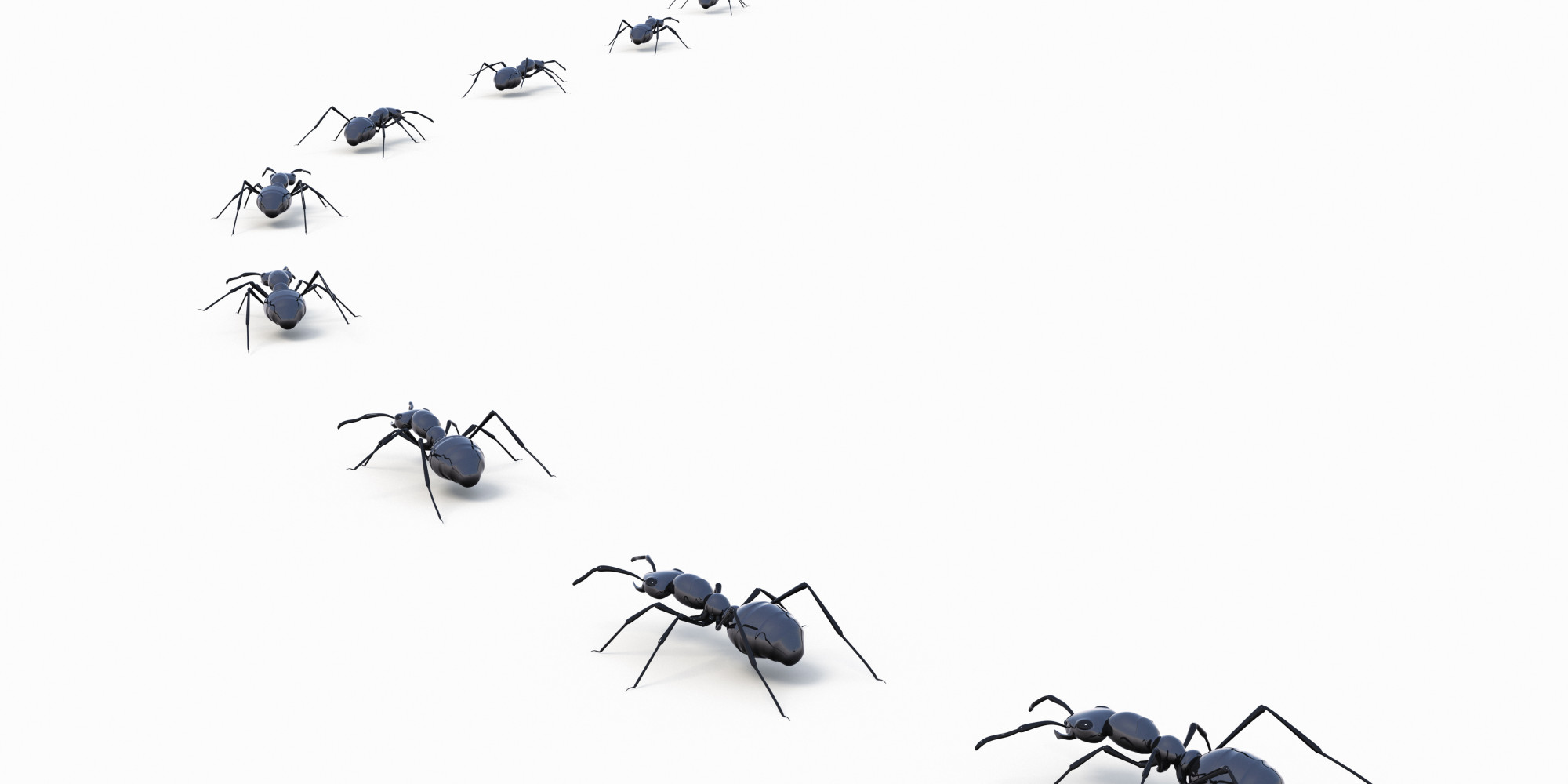 4 all natural ways to keep ants out of your house huffpost - Keep ants away in simple ways ...