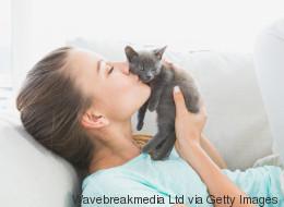 Votre chat vous aidera à vous remettre de votre ex