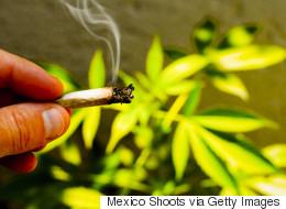 The Dangers of Legalising Marijuana