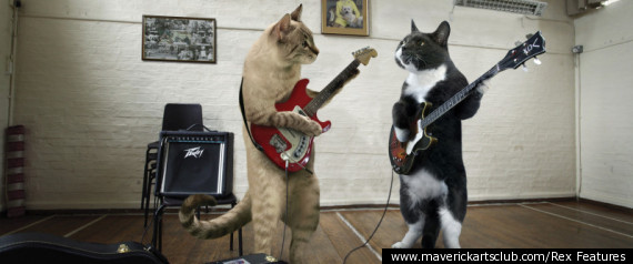funny felines in musical cat calendar cat got your drum pictures