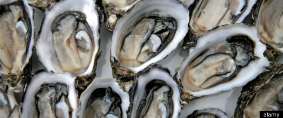OYSTERS NOROVIRUS