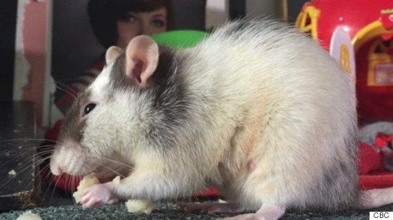 rat refuge