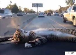 Ce chat est la meilleure décoration de voiture qu'on ait vue