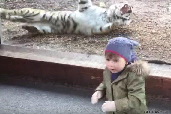 niño zoo