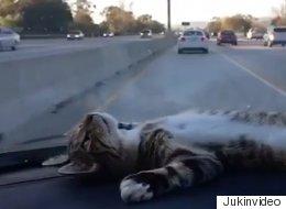 Ce chat en voiture va vous faire oublier vos problèmes (VIDÉO)