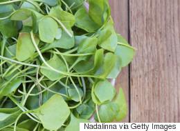 28 Wonderful Ways To Use Watercress