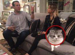 Le chat de Taylor Swift déteste les 5 à 7