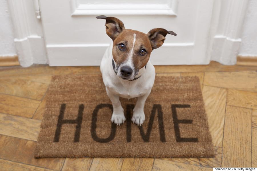 doormat dog