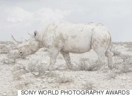 Todas las imágenes ganadoras de los Sony World Photography Awards 2016