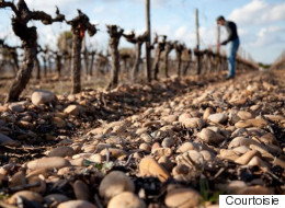 Les vins de Michel Gassier, porte-étendards des Costières-de-Nîmes
