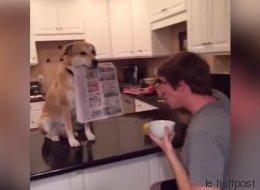 Ce chien est vraiment le meilleur ami de l'homme (VIDÉO)