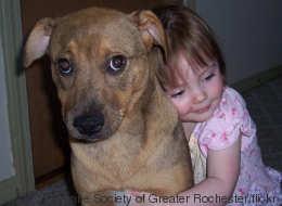 Vous aimez faire des câlins à votre chien? Lui peut-être moins