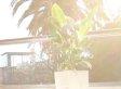 Mit dieser Pflanze könnt ihr euer Smartphone laden (Video)