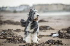 Dog on windy beach | Pic: Getty Images