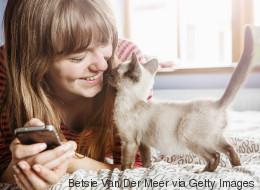 31 images qu'uniquement les propriétaires de chat comprendront