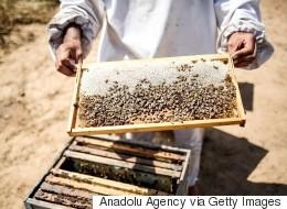 Un vol de plus de 180 ruches et de 5 millions d'abeilles au Québec