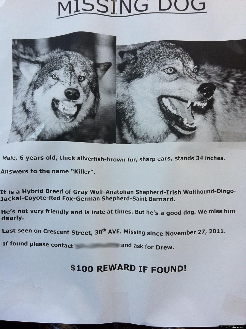 Dog Named Lucky Poster
