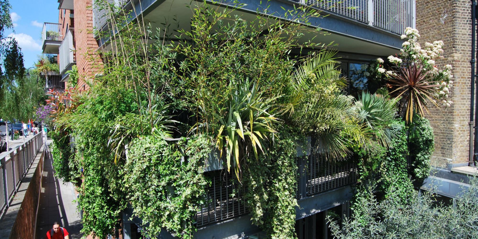 Ocho plantas para que tu terraza parezca una jungla - Plantas resistentes al sol para terrazas ...