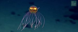 MEDUSE DECOUVERTE