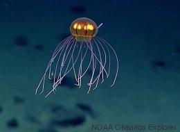 Une incroyable méduse dans les profondeurs de l'océan (VIDÉO)
