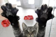 Katze | Bild: PA