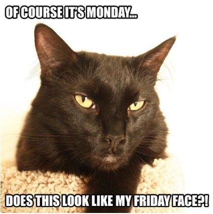 Grumpy Cat Black Friday Images