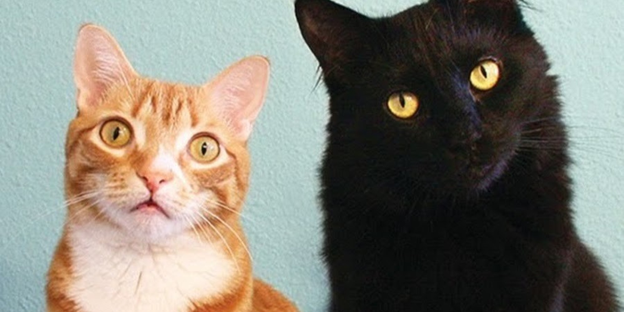 cat is a mans best friend adopting cats in the united states Adopt a pet from best friends animal sanctuary in kanab, utah we have dogs, cats, horses, goats, birds (parrots), rabbits, pigs and other animals.