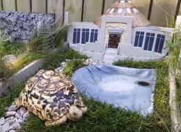 Il crée un mini Jurassic Park... pour sa tortue (VIDÉO)