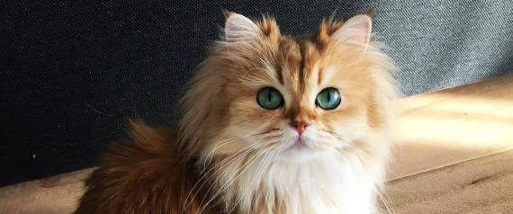 PRETTIEST CAT