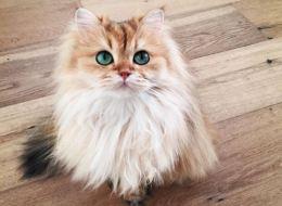 On a trouvé le plus beau chat du monde