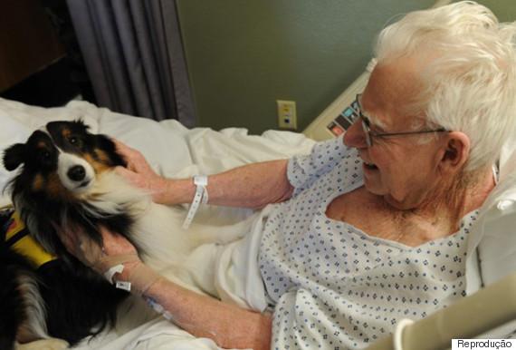 cachorro hospital