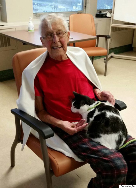 idoso gato hospital
