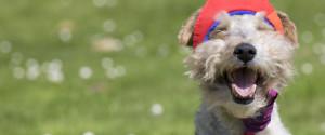 Animal Rights Dog