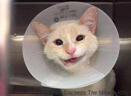 Une chatte miraculée sourit à la vie (PHOTOS)