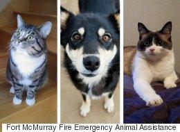 Des animaux de compagnie sont coincés, seuls, à Fort McMurray