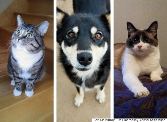 fort mcmurray pets