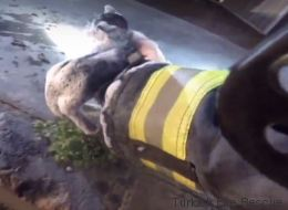 Des pompiers sauvent des chatons de la plus douce des manières (VIDÉO)
