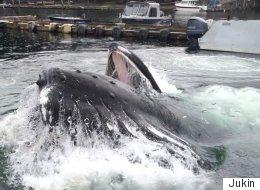 Incroyable. Une baleine fait une surprise dans un port en Alaska  (VIDÉO)