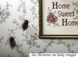 Bugs Will Leave Your Home Alone With These Easy Hacks