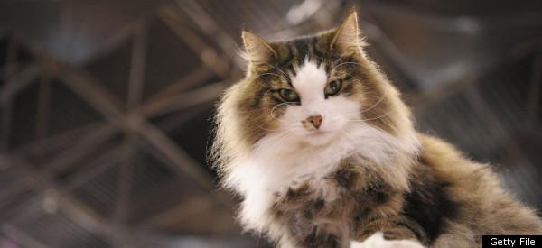 Top Cat Names Of 2011 Photos