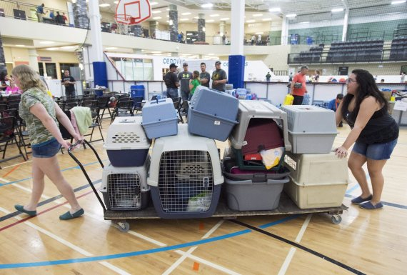 fort mcmurray fire pets