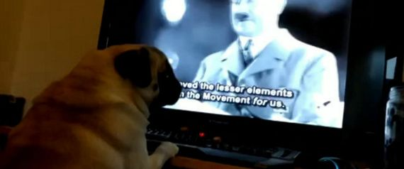MAN ARRESTED AFTER TEACHING PUG TO DO A NAZI SALUT