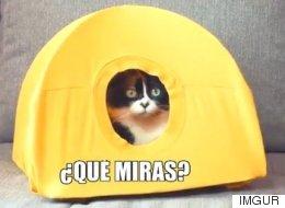 Fabrica una casa para tu gato con perchas y una camiseta