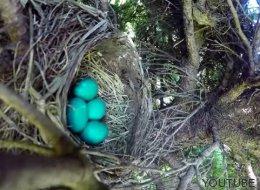 El increíble final de un vídeo que sólo grababa un nido con huevos